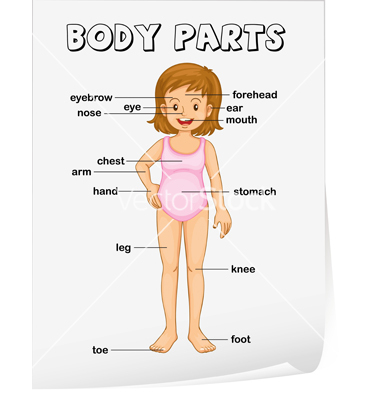 Llt 307 final teaching body parts in spanish home students will review and learn the body parts and words related to the body in spanish they will also be able to label the body parts and recognize them ccuart Choice Image